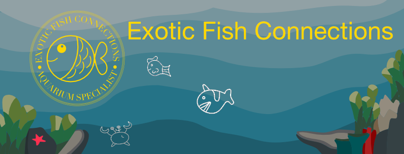 Exotic Fish Connections